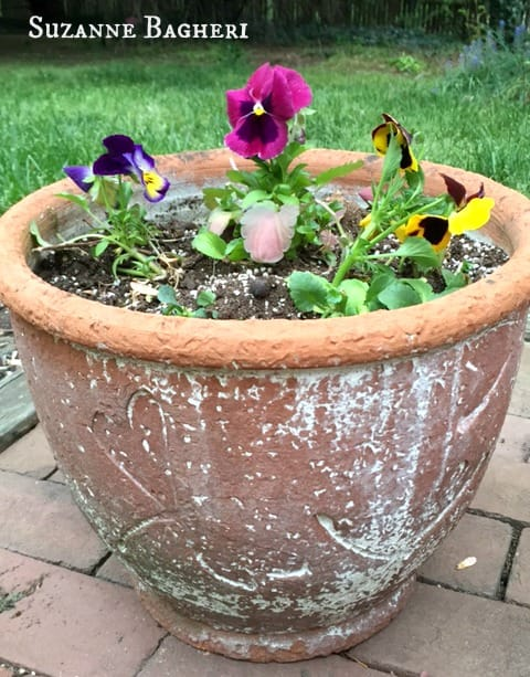 shabby flower pot